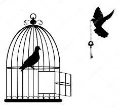 kooi vogel